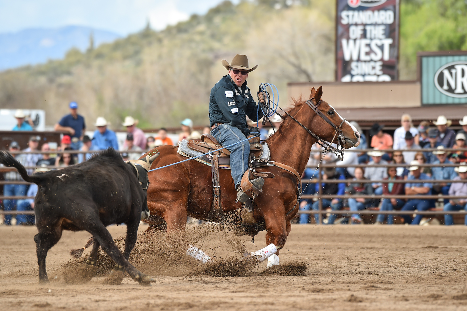 Arizona Horses for Sale | Rancho Rio Horse Auction 2018 Sale Results